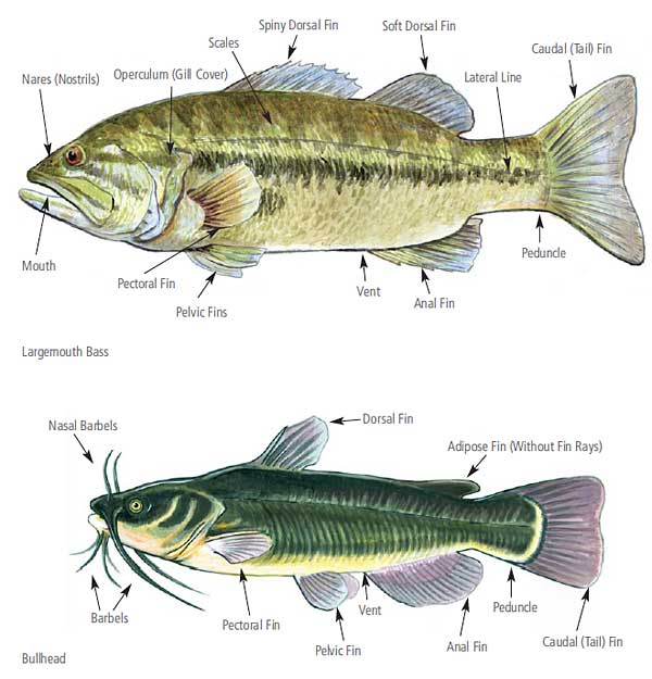 Natural History Illustrations by John Miller